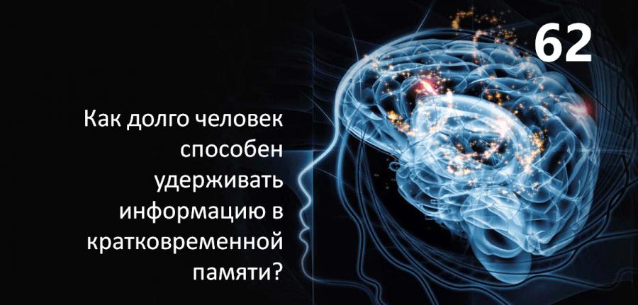 Как долго человек способен удерживать информацию в кратковременной памяти?