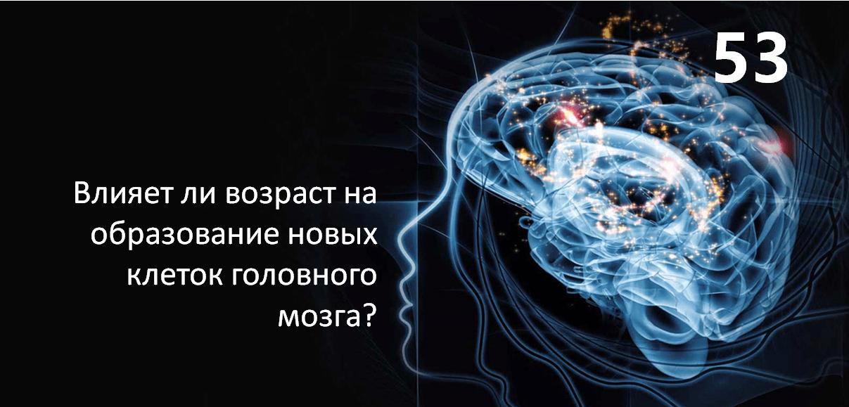 Влияет ли возраст на образование новых клеток головного мозга?